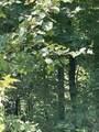 180 Arborwood Ln - Photo 7