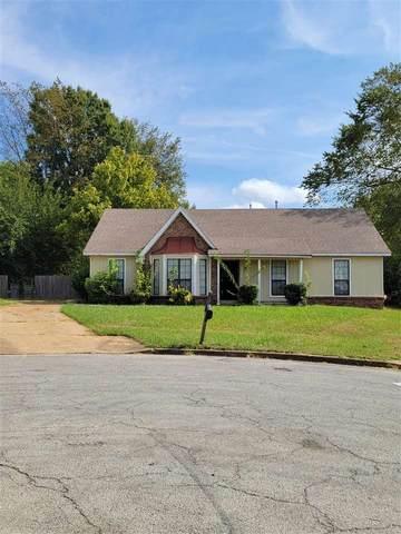 3890 Birchshade Cv, Memphis, TN 38115 (#10108722) :: J Hunter Realty