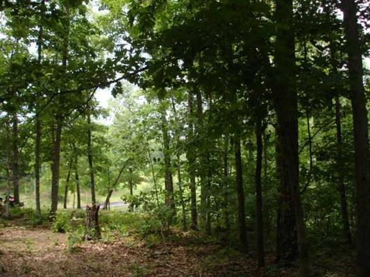 LOT# 154 Sandpiper Pt, Counce, TN 38326 (#10004392) :: The Wallace Team - RE/MAX On Point