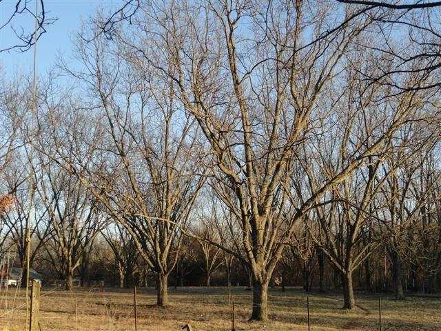 566 Island Forty Rd, Unincorporated, TN 38127 (#10020097) :: The Wallace Team - RE/MAX On Point