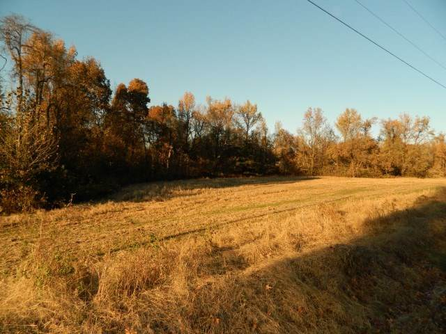 LOT 8 Dolan Rd, Unicorp/Drummonds, TN 38023 (#10073796) :: All Stars Realty
