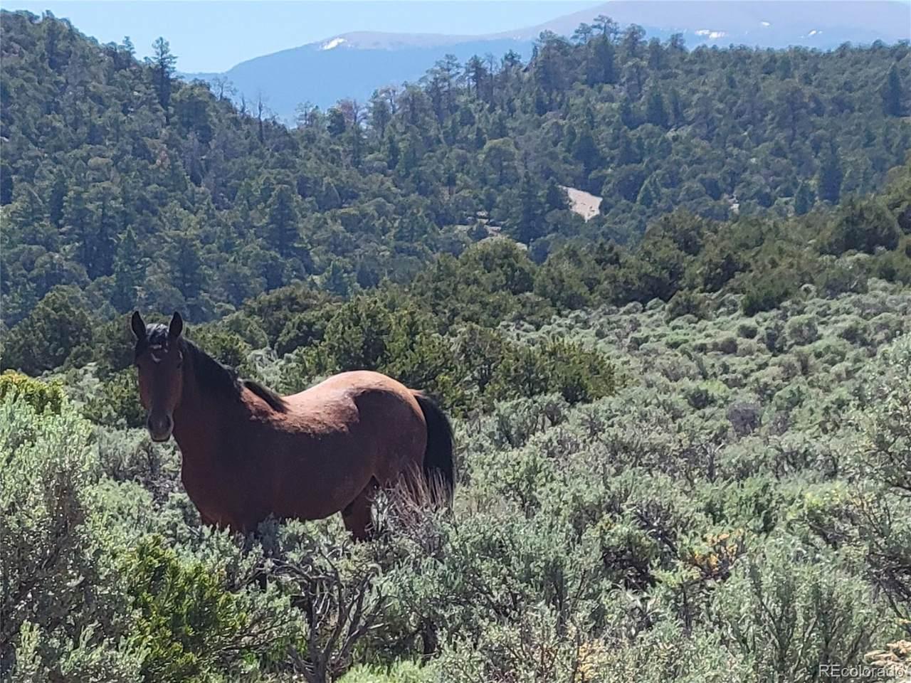 35.1 ac Whitetail And Big Buck Trail - Photo 1