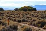 70+ Acres Reichwein Ranches - Photo 17