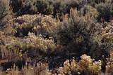 70+ Acres Reichwein Ranches - Photo 18