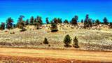 529 Goldenburg Canyon Road - Photo 2