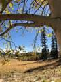 450 Teton Trail - Photo 14