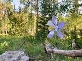 22536 Cheyenne Trail - Photo 4