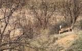 17555 County Road V - Photo 7