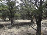 Pinion Trail - Photo 6