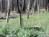 453 Wagon Mesa Loop - Photo 18