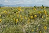 533 Camino Del Rey - Photo 4