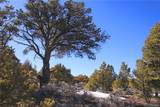 000 Big Buck Trail - Photo 25