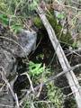 16139 Cochise Trail - Photo 10
