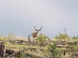 16139 Cochise Trail - Photo 28