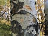 1 Weaver Spur - Photo 40