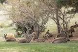 11052 Lone Pine - Photo 40