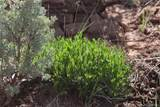 Lot 12 Jack Rabbit Trail - Photo 18