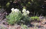Lot 12 Jack Rabbit Trail - Photo 31