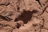 Lot 12 Jack Rabbit Trail - Photo 8