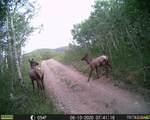 137 Mackey Mine Road - Photo 38