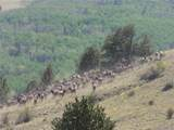Guffey, Colorado 80820 - Photo 2