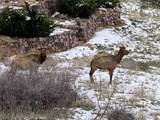 7358 Hawk Nest Trail - Photo 1
