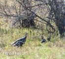 191 Two Creeks - Photo 32