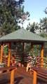 11628 Ranch Elsie Road - Photo 15