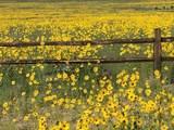 11444 Antelope Road - Photo 40