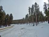National Forest Drive - Photo 2