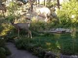 5570 Sunshine Canyon Drive - Photo 8