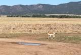 5 Antelope Run - Photo 3