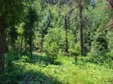13117 Spruce Creek Circle - Photo 12