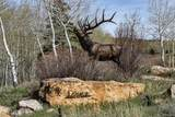 1155 County Road 14 - Photo 40