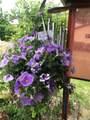10521 Livingston Drive - Photo 30