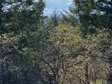 14860 Elk Mountain Trail - Photo 11