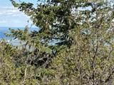 14860 Elk Mountain Trail - Photo 12