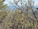 14860 Elk Mountain Trail - Photo 6