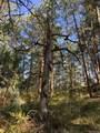 1697 Spruce Mountain Drive - Photo 9