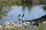 8855 Bear Creek Drive - Photo 14