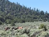 35.1 ac Whitetail And Big Buck Trail - Photo 11