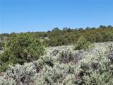 35.1 ac Whitetail And Big Buck Trail - Photo 18
