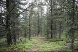 6594 Forbes Road - Photo 4