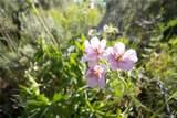 31475 Shoshone Way - Photo 9