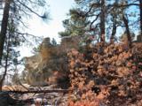 230 Scrub Oak Way - Photo 11