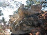 230 Scrub Oak Way - Photo 13