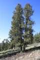 4476 Middle Fork Vista - Photo 2
