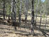 1525 Tibby Trail - Photo 5