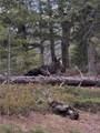 8467 Spirit Horse Trail - Photo 3