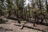 3006 Middle Fork Vista - Photo 5